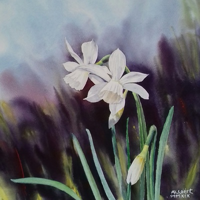 Jonquilles blanches