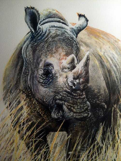 Rhino 01 0