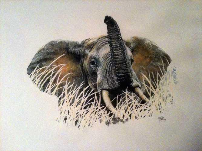 Elephant 01 0