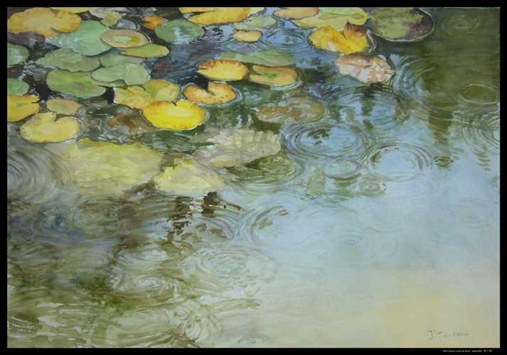 Mon bassin sous la pluie 0