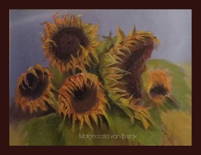Sunflowers in my garden 0