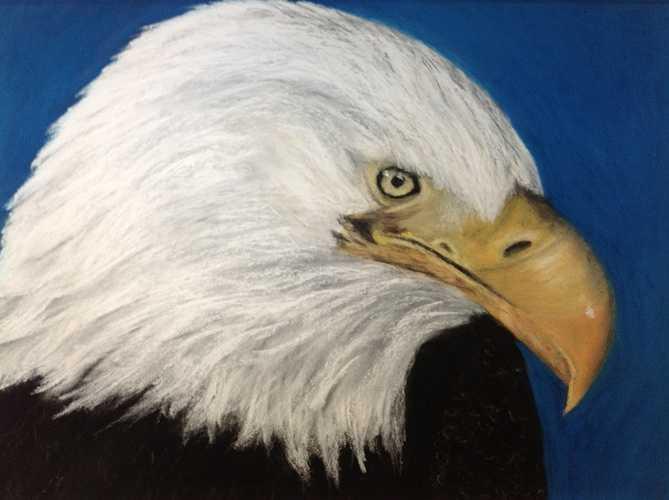 Aigle à tête blanche 0