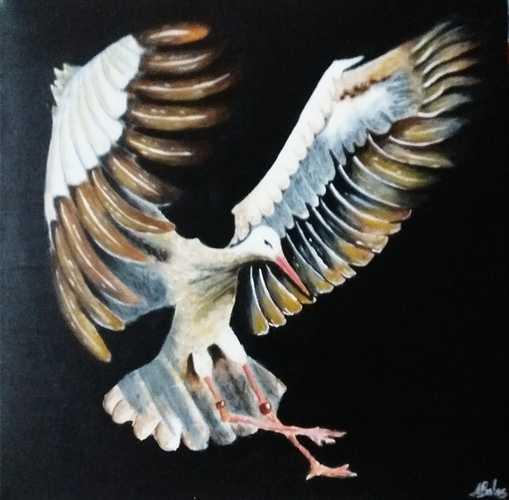 © Bird 0