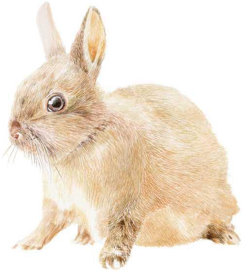 Small Rabbit 0