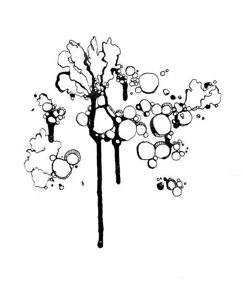 L'étude des Lichens 01 0