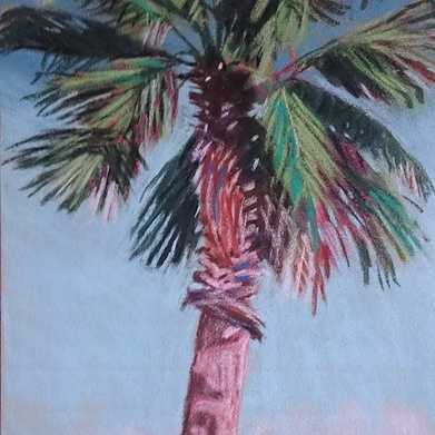 palm in cavalaire