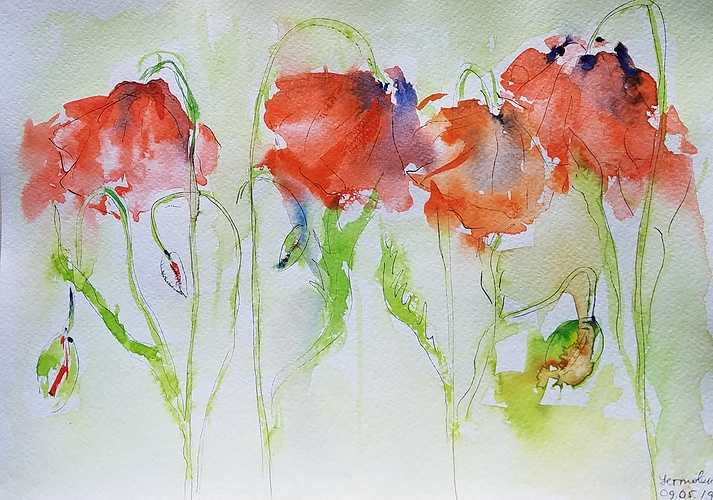 Flowers of poppies 0