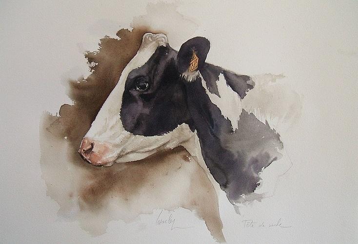 Tête de vache 0