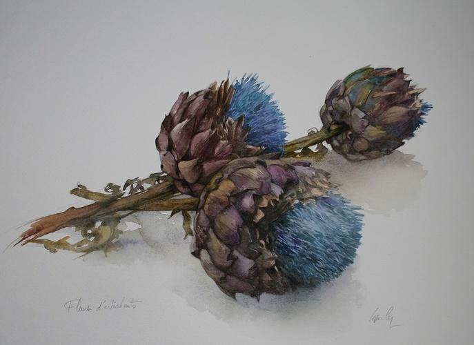 Fleurs d'artichauts 0