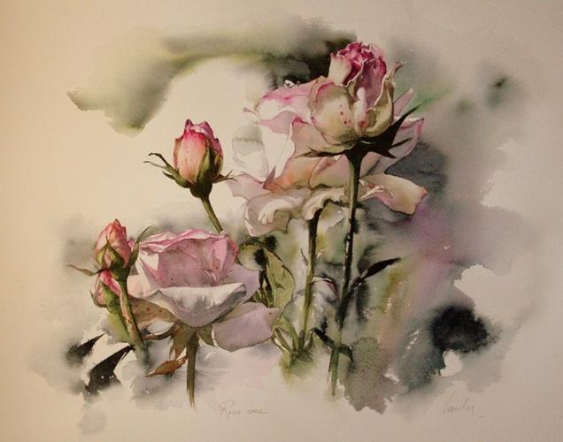 Roses roses 0