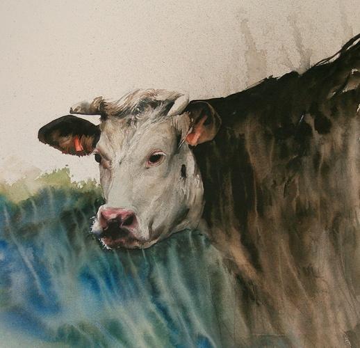 étude de matières dans une vache 0