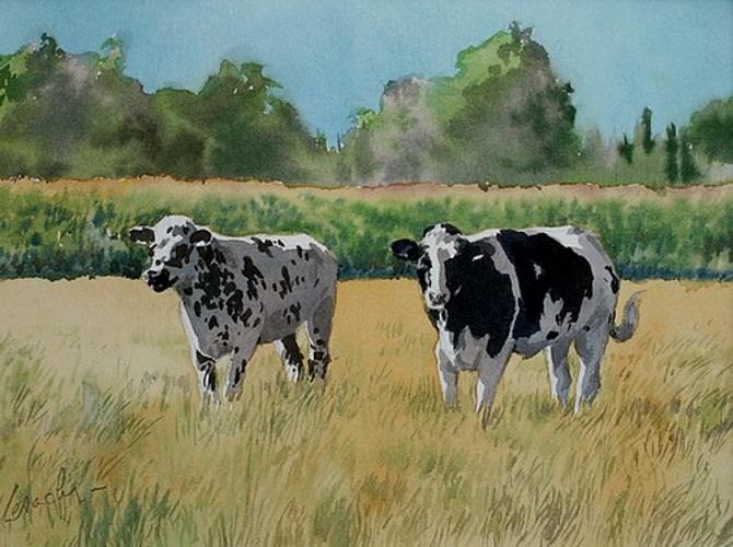 Deux vaches 0
