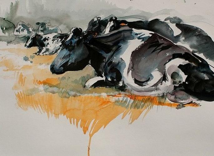 Nos amies les vaches 0