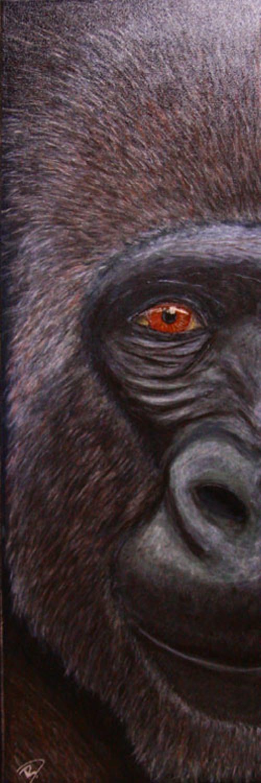 gorille 0