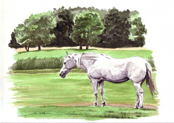 cheval retraité 0