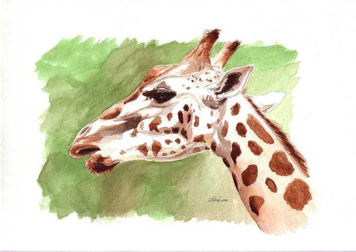 Girafe 0