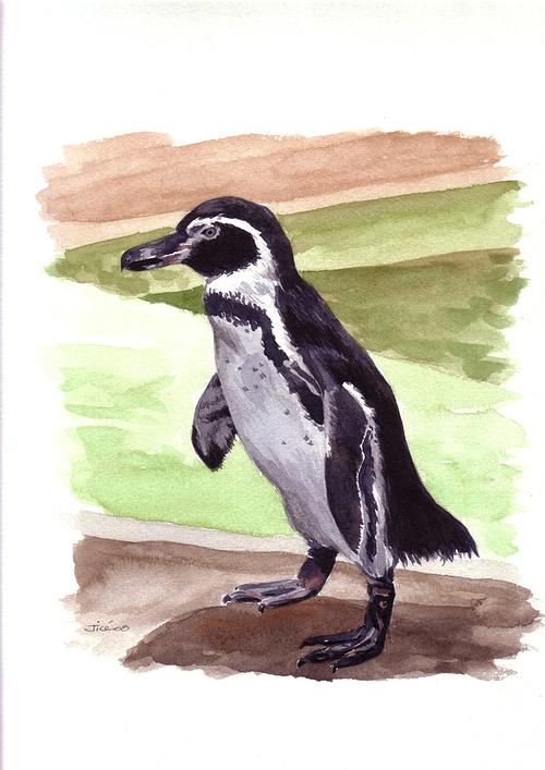 Pingouin 0