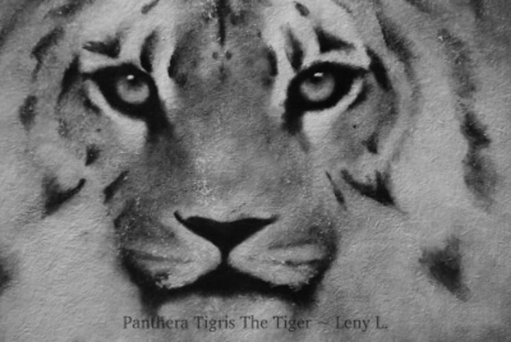 PANTHERA TIGRIS THE TIGER 0