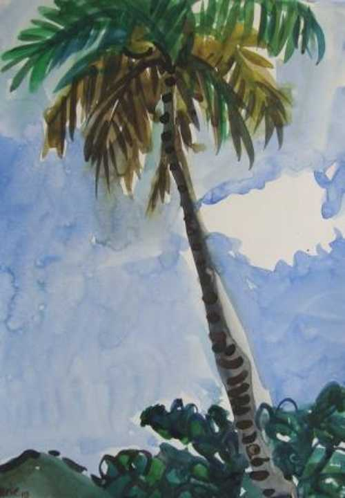 Coconut tree 0