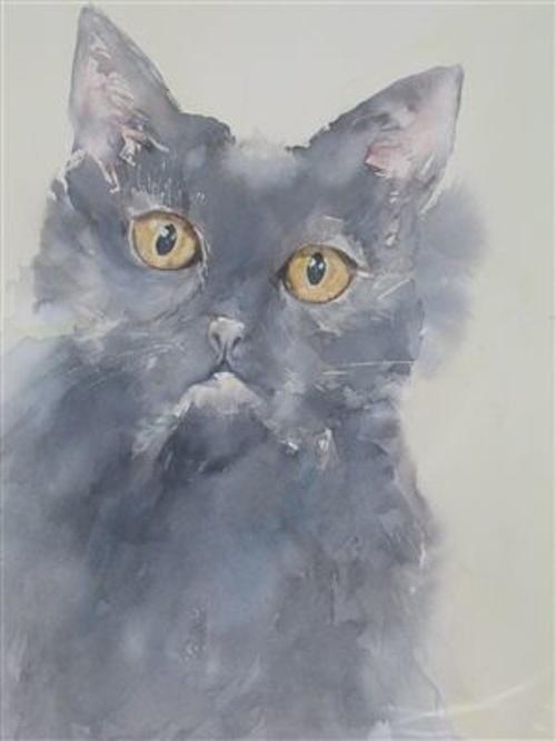 Mon chat 0