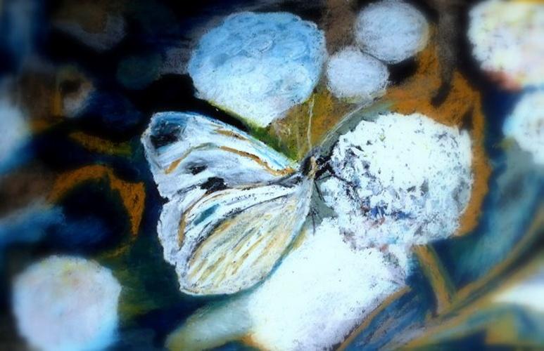 Butterfly 0