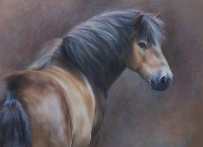 Exmoor Pony 0