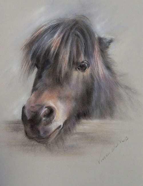 Shetland Pony 0