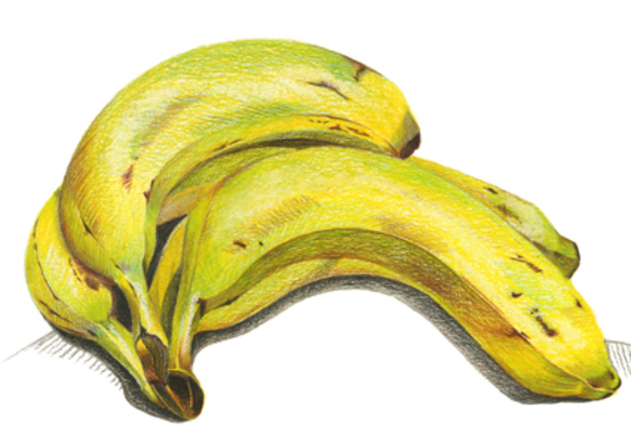 bananes A POINT 0