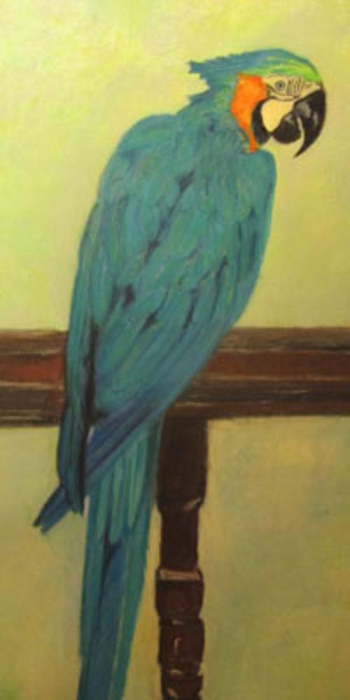 Blue Parrot 0