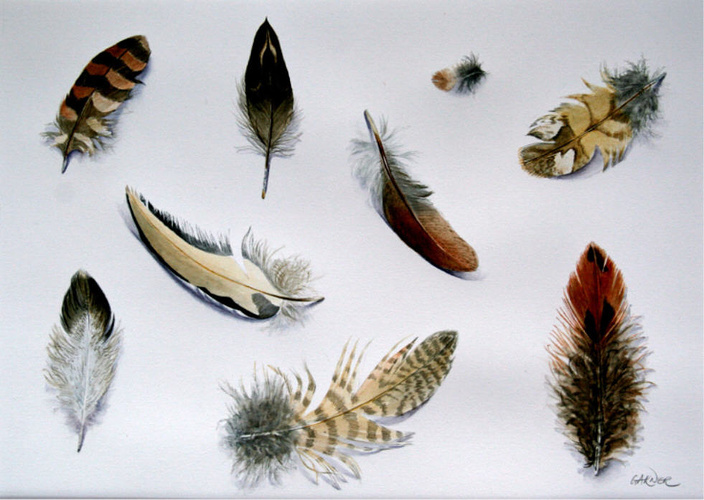 Feather Studies 4 0