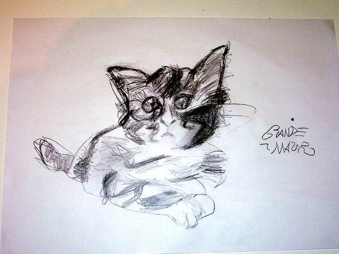 O gato (Le chat) 0