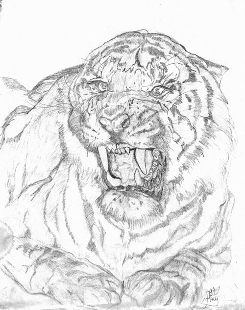Tête de tigre 0