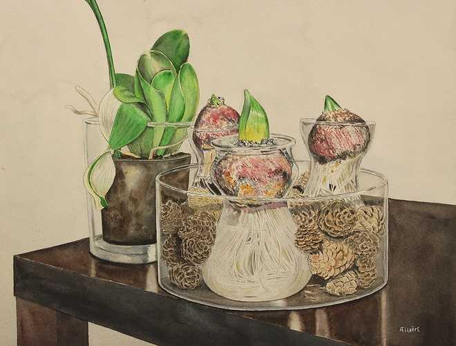 Les oignons de jacinthe 0
