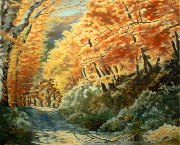 En automne dans les sous-bois des Albères 0