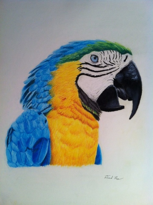 Blue and Yellow Macaw 0