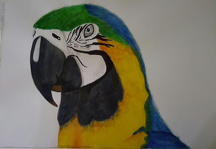 Macaw 0
