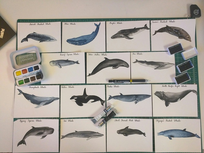 Whale illustrations 0