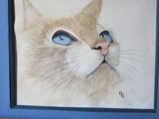 regard de chat 0