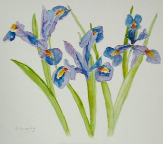 Blue Irises 0