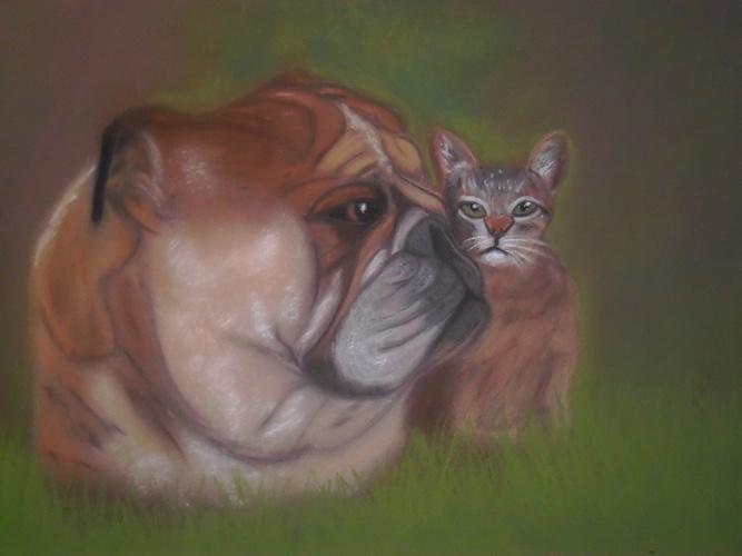 l'amitié d'un chien et d'un chat 0