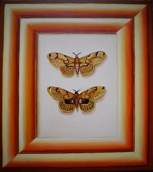 papillons 0