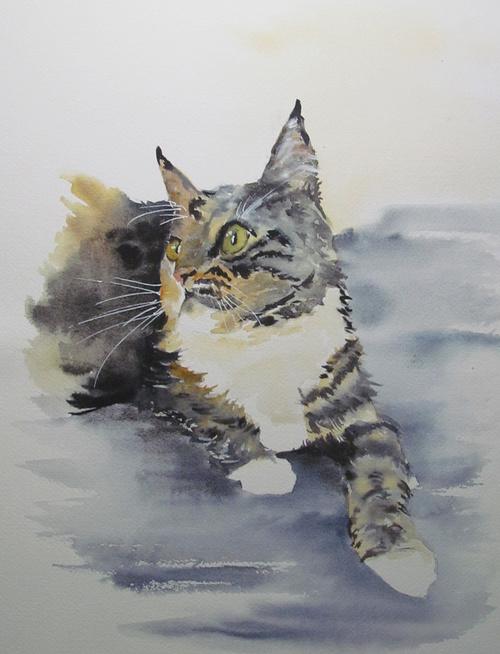 chat tigré 0