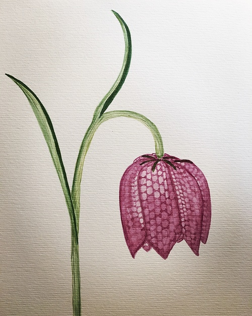 Fleur 0