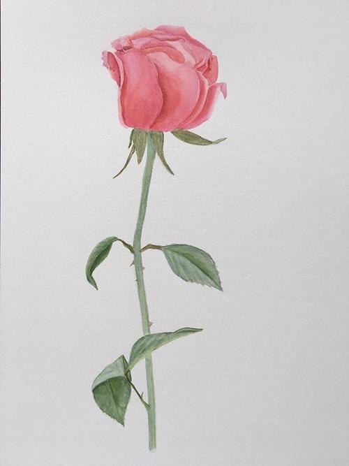 Rose 0