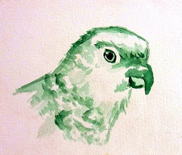 Parrot / Perroquet 0