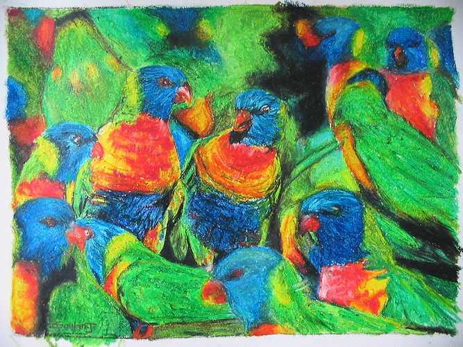 Perroquets à tête bleue 0