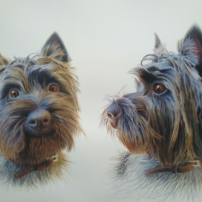 ''Charles, the cairn terrier''