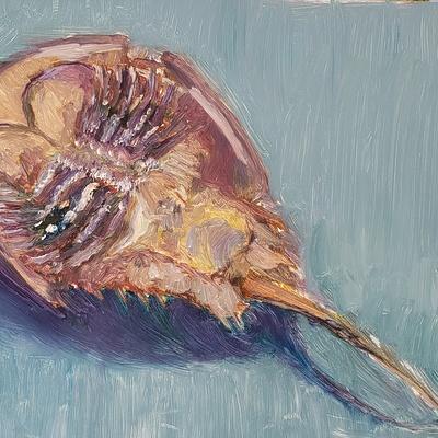 Horseshoe Crab at Caumsett, Lloyd Harbor. NY