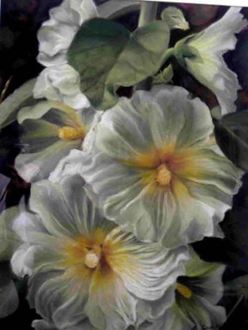 Roses trémières 4 0