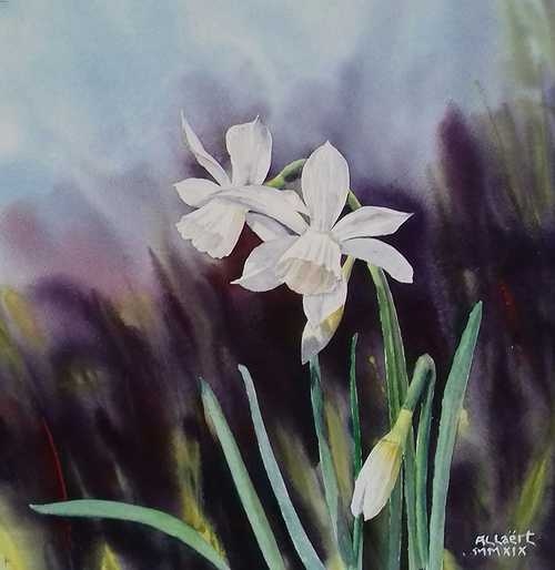 Jonquilles blanches 0